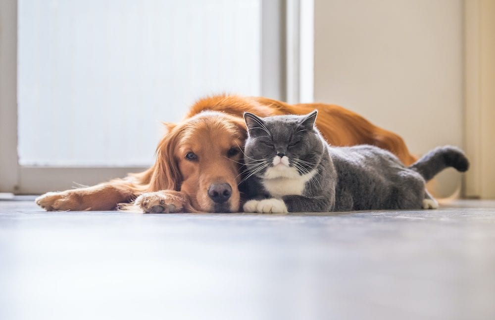 A dog and a cat relax together in one of the many apartments in Asheboro NC.